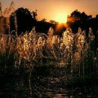 Танец воды в фонтане на закате солнца :: Zifa Dimitrieva