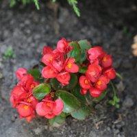 Цветочный хоровод-265. :: Руслан Грицунь