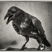 Тор - птица мудрая.... :: Алена Белодедова