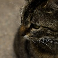 Кошка Марта на острове Валаам :: Лида Подволоцкая