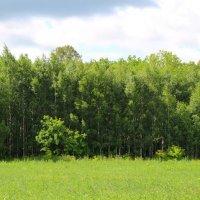 Зелень летнего дня :: Damir Si