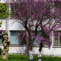 А недавно была весна :: Игорь Сикорский