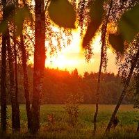 Тёплый вечер :: Андрей Куприянов
