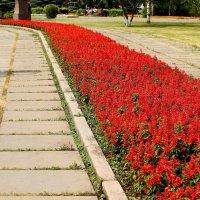 Цветы :: Дмитрий Арсеньев