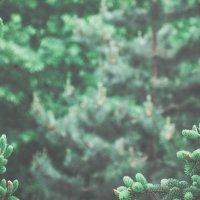 Green :: Anna Fiklistova