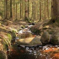 лесной ручей :: Андрей