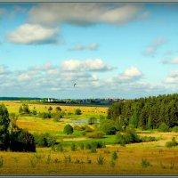 Пейзаж с чайкой! :: Владимир Шошин