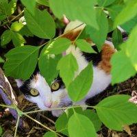 кошка :: Николай Климанов