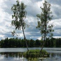 Белое озеро. Плавучий остров :: Елена Павлова (Смолова)