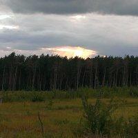 закат в лесу :: Алексей Альбин