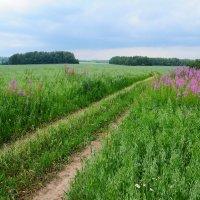 Бескрайние наши поля :: Андрей Куприянов