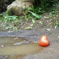 ...чьё-то сердце в луже слёз :: Сергей Андрейчук