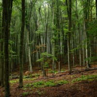 Крымский лес, туман :: Serge