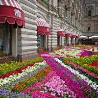 Цветочный ковер около ГУМа :: Ирина Князева