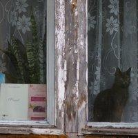 Кошка на окошке.... :: Елена