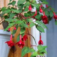 Пора цветов, пора цветения :: nika555nika Ирина