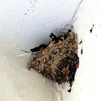 Гнездо :: Герович Лилия
