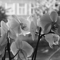 Цветы в Дагде (3) :: Юрий Бондер