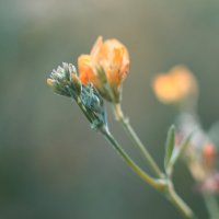 Flowers :: Дмитрий Тулупов
