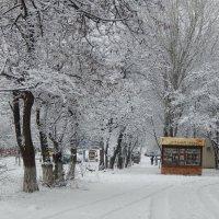 зимняя сказка :: Лилия Дубчак
