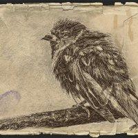 Птица :: Nn semonov_nn