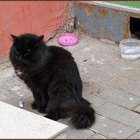 Новгородский черный кот :: Вера