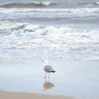 Чайка в море :: Ирина Дыкина