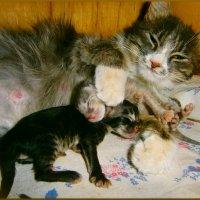 Вот такие мы..детки!!В крепких объятиях мама очень спокойно!! :: Людмила Богданова (Скачко)