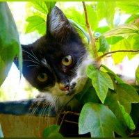Нафаня -проказник..повис на перилах балкона....попа на улице..а сам сквозь цветы поглядывает... :: Людмила Богданова (Скачко)
