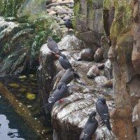 Птицы в зоосаду :: Natalia Harries