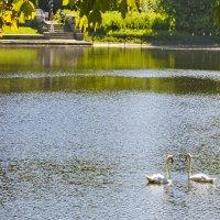 Два лебедя белых :: Евгения Мартынова