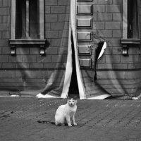 ...кошка на новоселье... :: Ольга Нарышкова