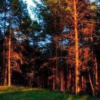 Закат в лесу :: Владимир Горубин
