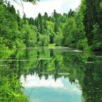 Радоновое озеро :: Iuliia Efremova