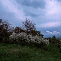 Тучки небесные, вечные странники :: Zifa Dimitrieva