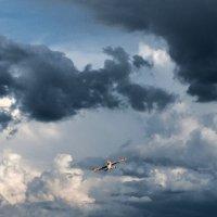Дорога в облака... :: Владимир Гусаров