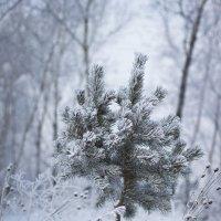 Зима :: Елена Дорогина