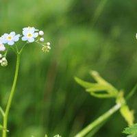 цветочки :: Анастасия Долгополова