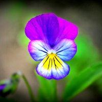 цветочек :: Олег Белан