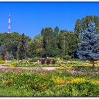 ботанический сад ТНУ им.Вернадского в г.Симферополь :: Sergey Bagach