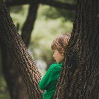 За деревом :: Михаил Кучеров