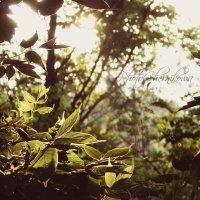 Окно в природу :: Анастасия Черникова