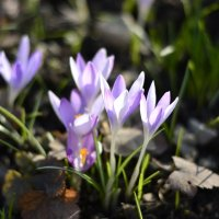 цветы :: Надежда Трофимова