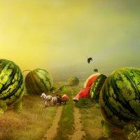 melon field :: dex66