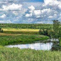 Летний пейзаж. :: Эдуард Пиолий