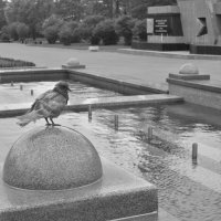 Одинокий голубь :: Мария Исаева