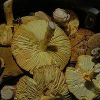 грибы :: Валерий Дворников