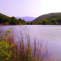 лесное озеро :: Андрей Козлов