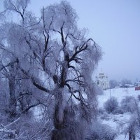 Ива. Барский сад. Ундоры. :: Эльвира Давлятова