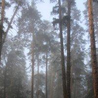 Туман. Сосны. :: Валерия  Полещикова